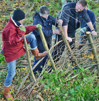 Hedge Laying © Keep Wales Tidy